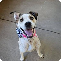 Adopt A Pet :: Lingonberry - McKinney, TX