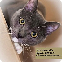 Adopt A Pet :: Sketch - Spring, TX