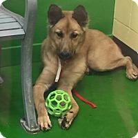 Adopt A Pet :: GRETA - PARSIPPANY, NJ