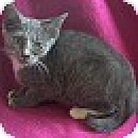 Adopt A Pet :: Gail - Spring Valley, NY