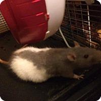 Adopt A Pet :: Feebas - Ann Arbor, MI