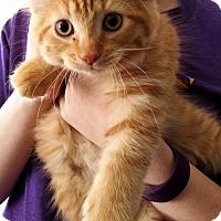 Domestic Longhair Kitten for adoption in Kalamazoo, Michigan - Scarecrow