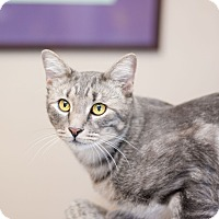 Adopt A Pet :: Cadet - Fountain Hills, AZ