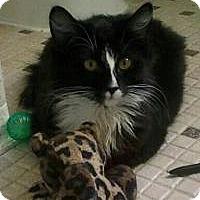 Adopt A Pet :: Bailey - Rochester, MI