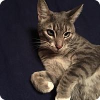 Adopt A Pet :: Keiko - Modesto, CA