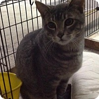 Adopt A Pet :: Sammy - Los Angeles, CA