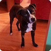 Adopt A Pet :: King - Raeford, NC