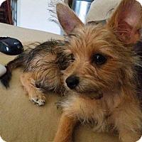 Adopt A Pet :: Benny - Goodyear, AZ
