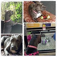 Adopt A Pet :: CiCi - Orlando, FL