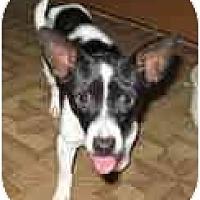 Adopt A Pet :: Poco Bill - Topeka, KS