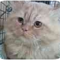 Adopt A Pet :: Sunshine - Delmont, PA