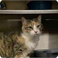 Adopt A Pet :: River Sprite - Lombard, IL