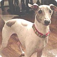Adopt A Pet :: Artie - Croton, NY