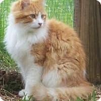 Adopt A Pet :: Mufasa - Ennis, TX