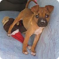 Adopt A Pet :: Wiggles - Orange Park, FL
