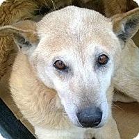 Adopt A Pet :: Rummie - Emory, TX