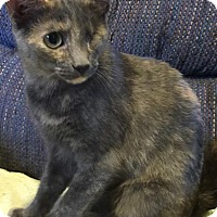 Adopt A Pet :: Pretty Girl Cat: Fostered - Rustburg, VA