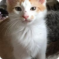 Adopt A Pet :: Cash - McKinney, TX