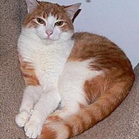 Adopt A Pet :: LM-Sunny Courtesy Listing - Devon, PA