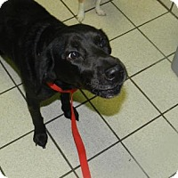 Adopt A Pet :: Lyla Garrity - Jersey City, NJ