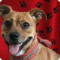 Adopt A Pet :: KC - san diego, CA