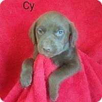 Adopt A Pet :: Cy - Chester, IL