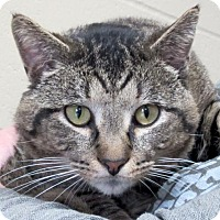 Adopt A Pet :: Charles - Reduced Fee! - Jefferson, WI