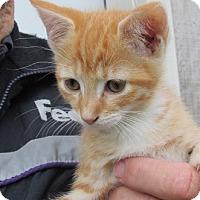Adopt A Pet :: Jane - Germantown, MD