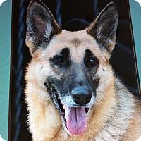 Adopt A Pet :: RIO VON ROHR - Los Angeles, CA