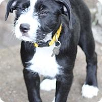 Adopt A Pet :: Elsie - Woonsocket, RI