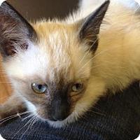 Adopt A Pet :: Sammy - Greeley, CO