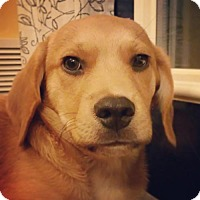 Adopt A Pet :: Delilah - Keyport, NJ