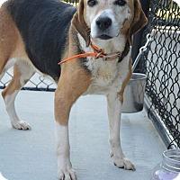 Adopt A Pet :: Natalie - Prince George, VA