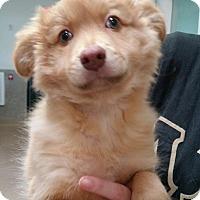Adopt A Pet :: Finn - Chambersburg, PA
