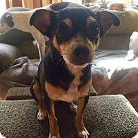 Adopt A Pet :: Antonio - Fort Atkinson, WI