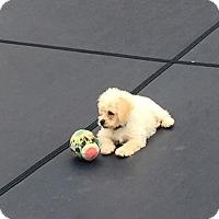 Adopt A Pet :: Konocha - Elgin, IL