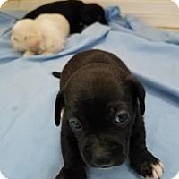 Adopt A Pet :: Montego - Fullerton, CA