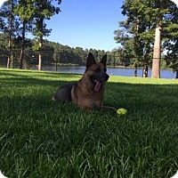German Shepherd Dog Dog for adoption in Morrisville, North Carolina - Razor