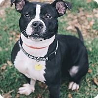 Adopt A Pet :: Chilton - Cleveland, OH