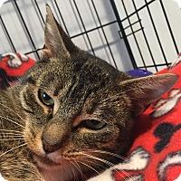 Adopt A Pet :: Dallas - Lafayette, NJ
