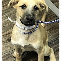 Adopt A Pet :: Elijah - Los Alamitos, CA
