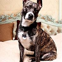 Adopt A Pet :: Scooter - Carlisle, TN