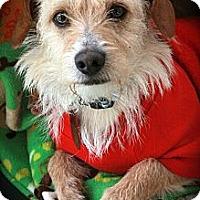 Adopt A Pet :: Henri - san diego, CA