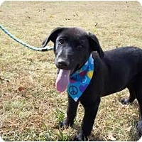 Adopt A Pet :: Weldon - Adamsville, TN