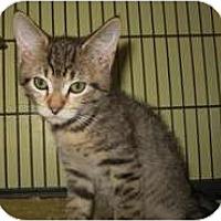 Adopt A Pet :: Brewster - Shelton, WA