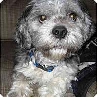 Adopt A Pet :: Maxwell - Mays Landing, NJ