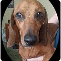 Adopt A Pet :: Bubba - Norfolk, NE