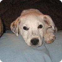 Adopt A Pet :: Reggie - Golden Valley, AZ