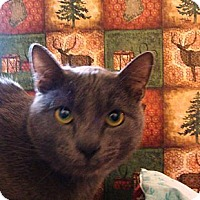 Adopt A Pet :: Fabiano - Albany, NY