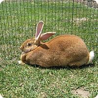 Adopt A Pet :: Frisbee - Bonita, CA